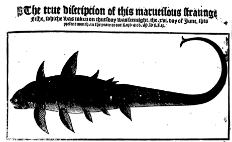 Woodcut image of a fish, 1569