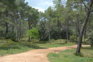 A woodland path, near Aix-en-Provence