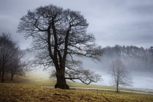 Empty boughs at Studley Royal, North Yorkshire. (c) NTPL.